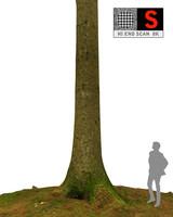 pine tree 3d obj