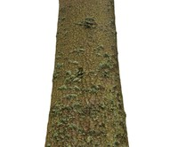 pine tree scanned 3d model