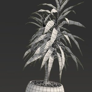 3D dracaena visualization