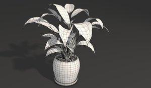 3D spathiphyllum visualizing plant model