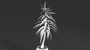 3D yucca plant
