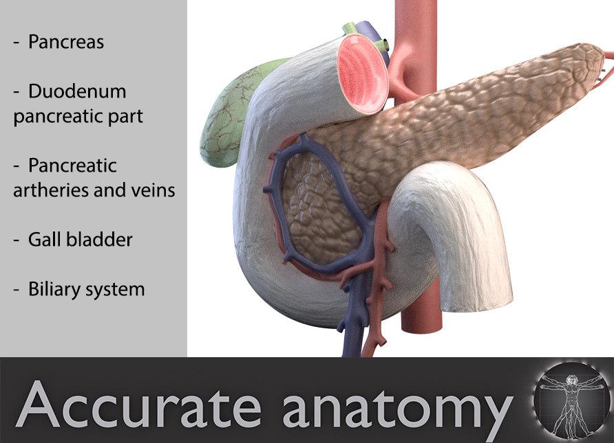 3d model pancreas duodenum medical