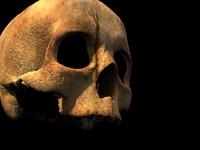 human skull max