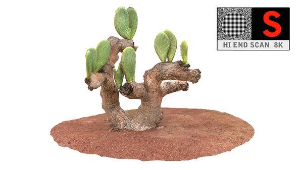 maya real cactus 8k