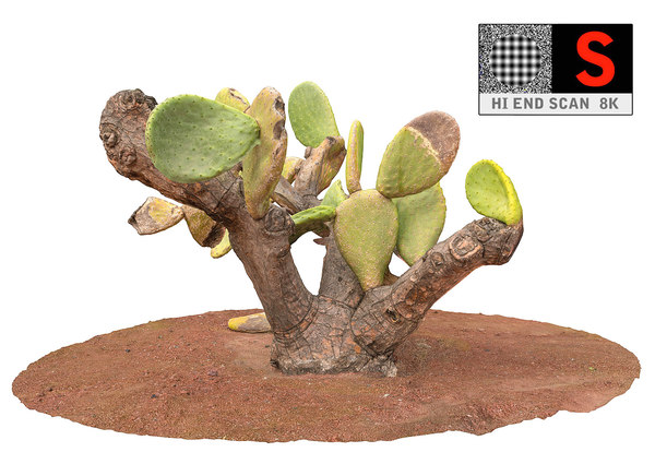 real cactus 8k 3d max