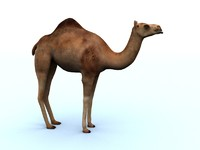 camel 3ds