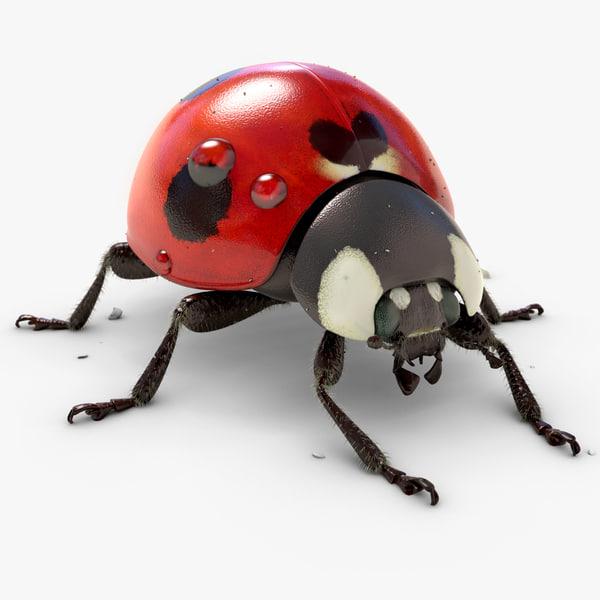 3d animation ladybug v-ray fur model