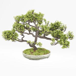 bonsai max