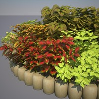 Coleus Bed in August