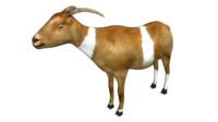 domestic goat 3d obj