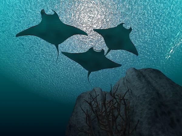 3d manta rays