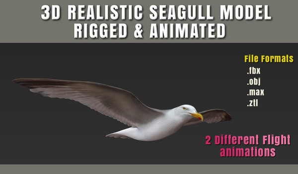 3d seagull animation fully rigged