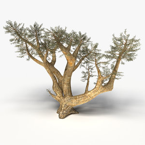 3d model frankincense tree