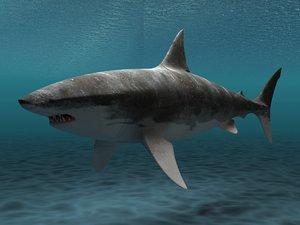 max great white shark
