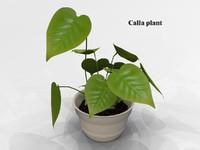 3d calla plant