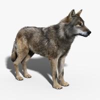 3d gray wolf fur