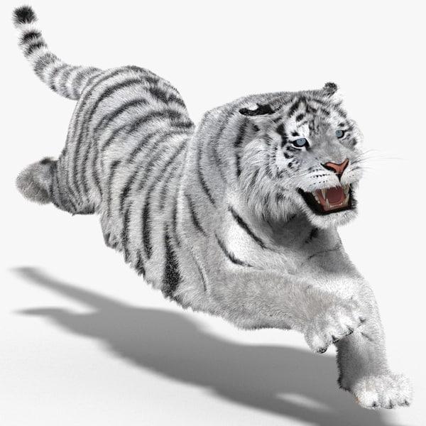 3d tiger amur white cat