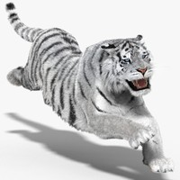 3d tiger amur white cat