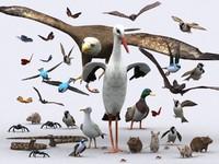 3d birds critters model
