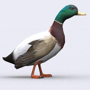3d model duck birds