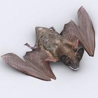 bat critters 3d model