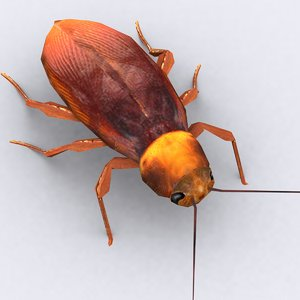 3d model cockroach critters