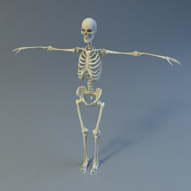 skeleton 3d 3ds
