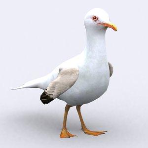 3d seagull birds