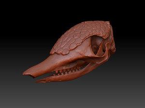3d armadillo skull model