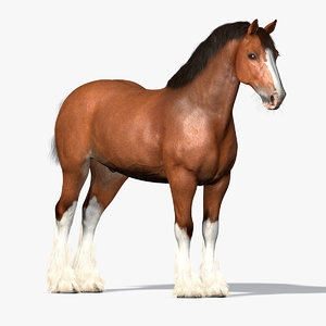 cinema4d clydesdale draft-horses
