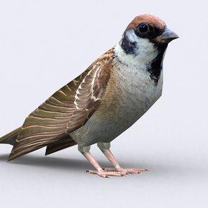 sparrow birds 3d model