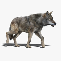 Gray Wolf(FUR)(RIGGED)