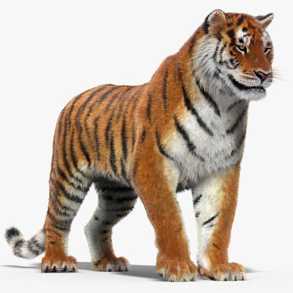 tiger rigged fur cat max