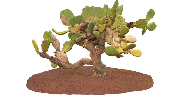 3d model real cactus 8k
