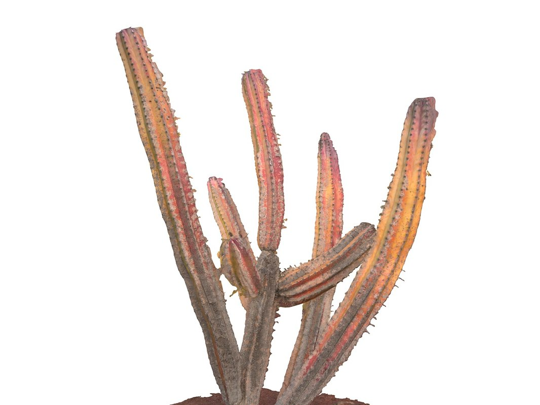 3d real cactus 8k model
