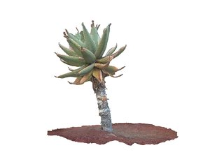 3d real aloes 8k model
