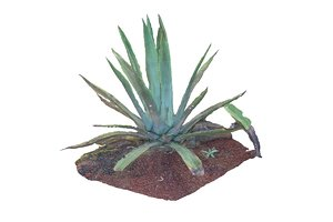3ds max aloes 8k