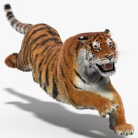 Tiger Amur (Animated) (Fur)