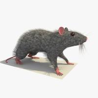 grey mouse rat standing 3d c4d