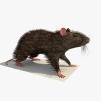3d model brown mouse rat standing