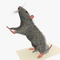 3d grey mouse rat standing model