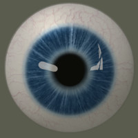 3d model human eye