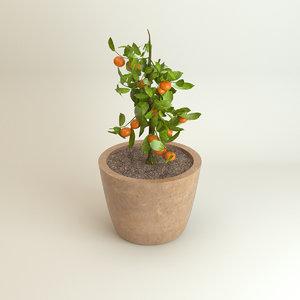 mandarine tree 3d model