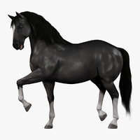 3d model horse black rigged fur