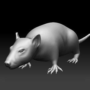 3d high-res sculpted rat model