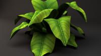 plant leaf 3d obj