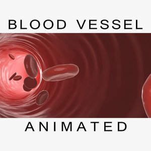 blood cells vessel animations 3d model