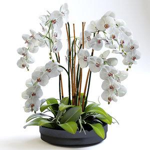 3d obj realistic orchids