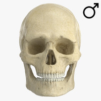 caucasoid male skull 3d max