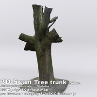 DBuzzi 3D Scan Tree Trunk Willow